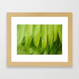 Fresh Tropical Photo Art - Raindrops on Palm Frond Framed Art Print