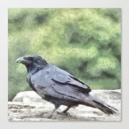 Crows Everywhere Are Equally Black Canvas Print
