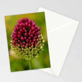 Pink Paintbrush Flower Stationery Cards