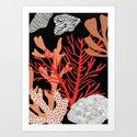 Corail by florentmanelli