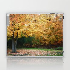 Beautiful Fall Trees Laptop & iPad Skin