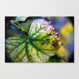 Withering Away Canvas Print