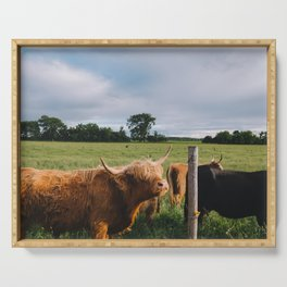 Highland Cows III Serving Tray