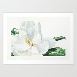 Watercolor Magnolia Blossom Art Print