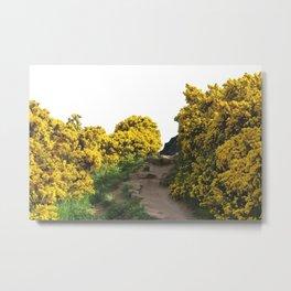 Path at Arthur's Seat Metal Print