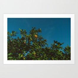 California Orange Tree III Art Print