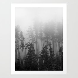 Foggy Forest Chinook Washington Grey Photography Print Misty Northwest Art Print