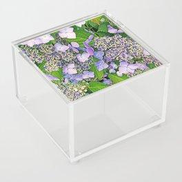 MAGIC LACECAP HYDRANGEA Acrylic Box