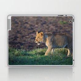 Lion cub in morning light Laptop & iPad Skin