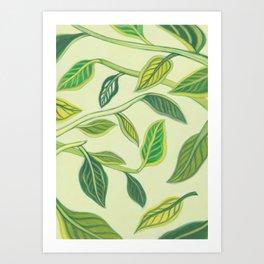 Ficus benghalensis Art Print