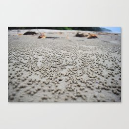 Sand balls on the beach from crabs doing housecleaning Canvas Print