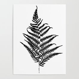 Fern silhouette. Isolated on white background Poster