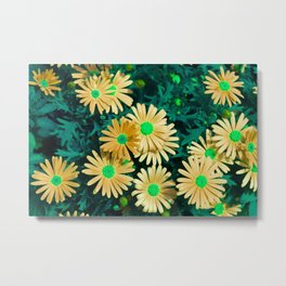 Floral Background, Purple Marquerite Daisy, Felicia amelloides, Yellow Kapaster. Multicolor spring Metal Print