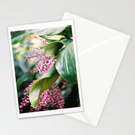Tropical Rio Flower Stationery Cards