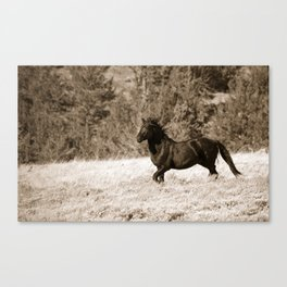 Free Runner - Sepia Canvas Print