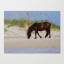 Shack Pony Canvas Print