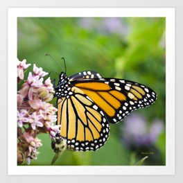 Colorful Monarch Butterfly Art Print