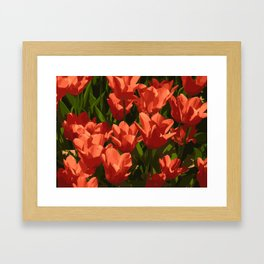 red tulips Framed Art Print