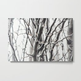 Cold Branches Metal Print