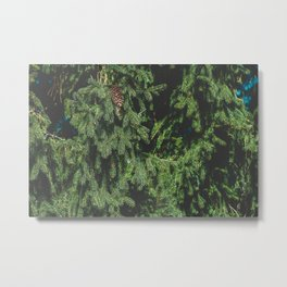 Branches of northern spruce Metal Print