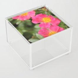 Neon Flowers Acrylic Box