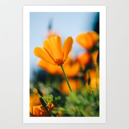 Orange Flower Macro II Art Print