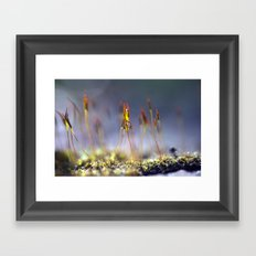 Capillary thread moss 745 Framed Art Print