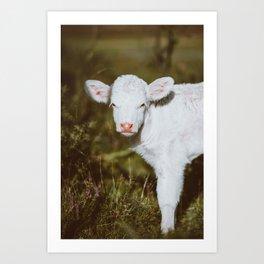 White Calf (Color) Art Print