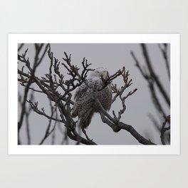 Snowy Owl in Tree Art Print