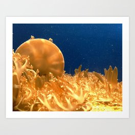 Sea Jellies Art Print