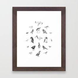 Manx Fauna - (British) Birds Framed Art Print
