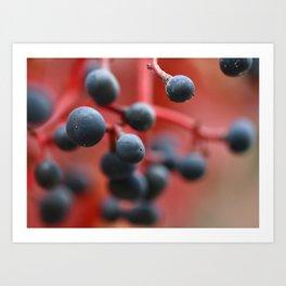 Red autumn 2 Art Print