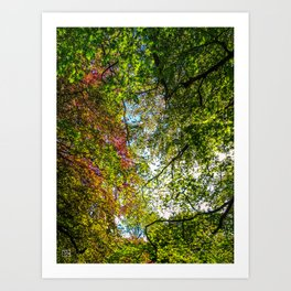 Tree Leafs. Art Print