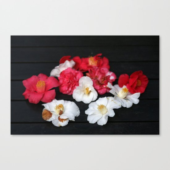 Red and White camelia Canvas Print