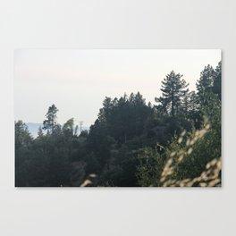 Foliage 1 Canvas Print