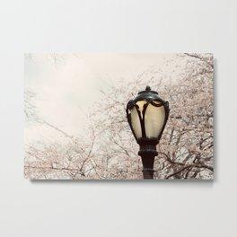 Central Park Blossom #1 Metal Print