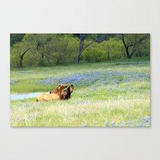 Horses & Bluebonnets Canvas Print