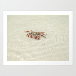 crab in the water Art Print