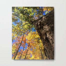 Fall Perspective #fall #fallcolors #perspective Metal Print