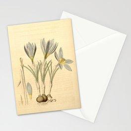 Flower 3868 crocus annulatus adamicus Mons Adam s variety of Crocus Annulatus1 Stationery Cards