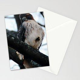 Talons Stationery Cards