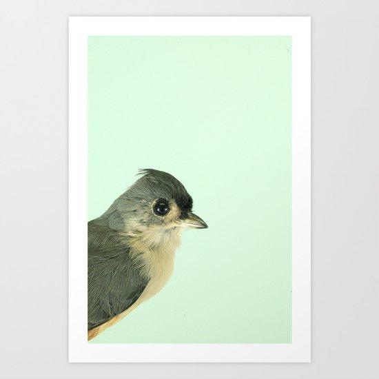 Natural History Bird Photograph - Tufted Titmouse Art Print
