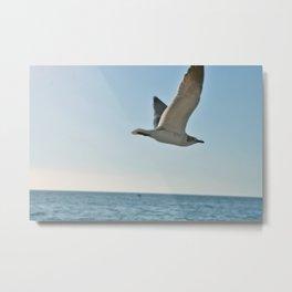 Captiva Gull Metal Print