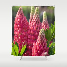 Pink flower towers (small-flowered lupin) Shower Curtain