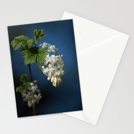 Understated Luminary      White Flowering Currant Bloom Stationery Cards