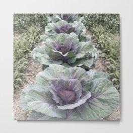 Purple Cabbage Patch Metal Print