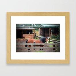 Bay Paso Fino Framed Art Print