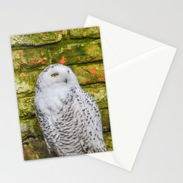 Snowowl With A Stone Background Stationery Cards