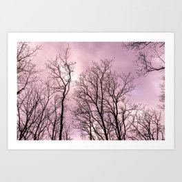 Naked trees, pink cloudy sky Art Print