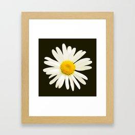 Daisy on a black background - #Society6 #buyart Framed Art Print